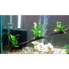 Как правильно установить фильтр в аквариум: как должно стоять устройство фильтрации, как оно работает и на какой глубине его поставить — фото, видео