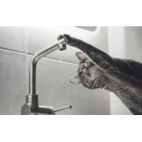 Фильтрованная вода: чем она лучше кипяченой, польза и вред для организма человека, можно ли пить жидкость из фильтра