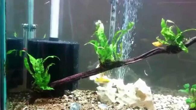 установка фильтра в аквариум видео
