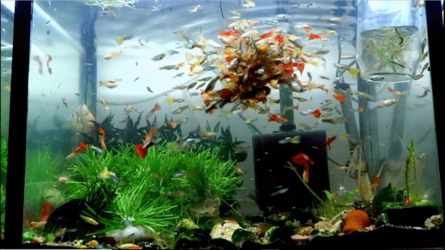 как должен стоять фильтр в аквариуме фото