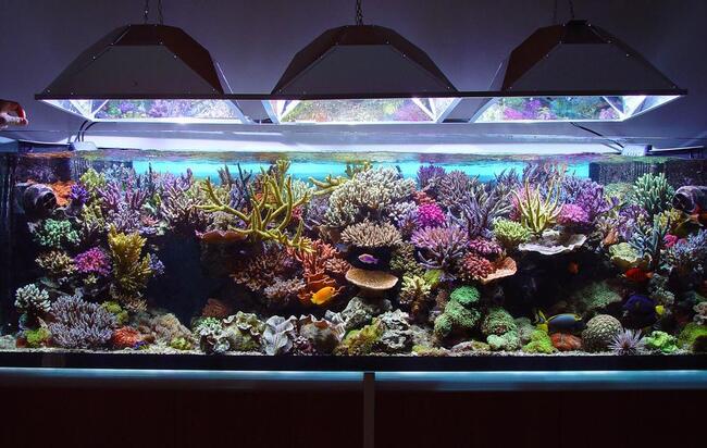 установка фильтра в аквариум aquael видео