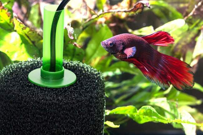 на какую глубину опускать фильтр в аквариуме