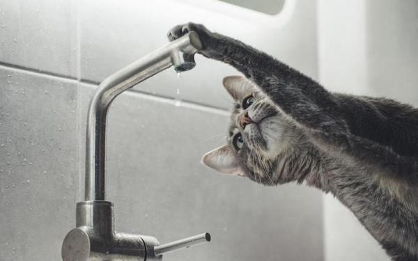 какая вода лучше кипяченая или фильтрованная